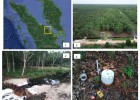 Impacts of peatlands rewetting on greenhouse gas emissions in Riau Province